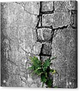 Wall Ferns Acrylic Print