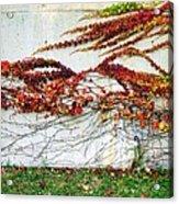 Wall Of Fall Acrylic Print by Todd Sherlock