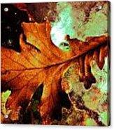 Warm Oak Acrylic Print