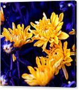 Warm Yellow In A Sea Of Blue Acrylic Print