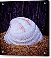 Washed A Shore - 2 Acrylic Print
