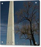 Washington Monument's World Famous Kite Eating Tree Acrylic Print