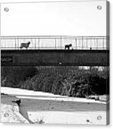 Watch Dogs Acrylic Print
