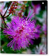 Watch For The Claw Acrylic Print