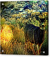 Watcher Acrylic Print