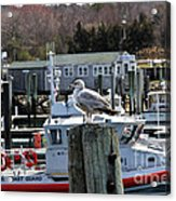 Watchful Acrylic Print by Extrospection Art