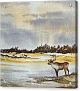 Watching The Herd Acrylic Print