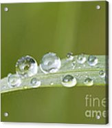 Water Drop On Blade Grass Acrylic Print
