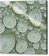 Water Droplets On Leaf, Annapolis Acrylic Print