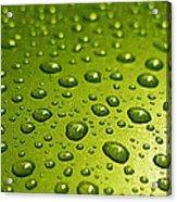 Green Card. Macro Photography Series Acrylic Print