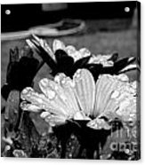 Water Drops On Flowers Acrylic Print