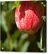 Water Drops On Red Acrylic Print