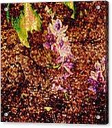 Water Flowers Vietnam Acrylic Print