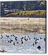Water Fowl At Lake Wilhelmina Arkansas Acrylic Print