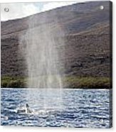 Water From A Whale Blowhole Acrylic Print