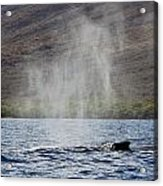 Water From A Whale Blowhole II Acrylic Print
