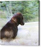 Water Fun Acrylic Print