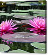 Water Lilies Acrylic Print by Bill Cannon
