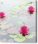 Water Lilies In The Morning Acrylic Print by Michael Taggart