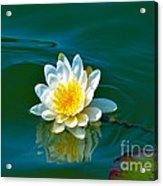 Water Lily 4 Acrylic Print by Julie Palencia