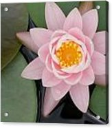 Water Lily Centered Acrylic Print