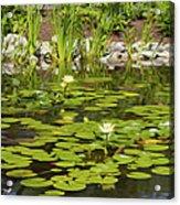 Water Lily Garden 2 Acrylic Print