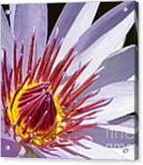 Water Lily Soaking Up The Sun Light Acrylic Print