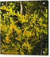 Water Reflection Abstract Autumn 1 G Acrylic Print