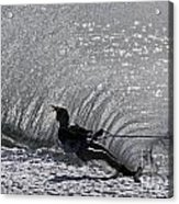 Water Skiing 3 Acrylic Print