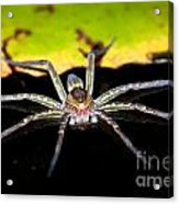 Water Spider Acrylic Print