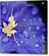 Water The Soul Acrylic Print