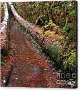 Water Trail Acrylic Print