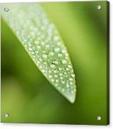 Waterdroplets Acrylic Print