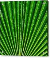 Waterdrops On Palm Leaf Acrylic Print