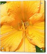 Watered Daylily  Acrylic Print