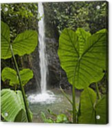 Waterfall In Lowland Tropical Rainforest Acrylic Print