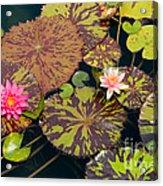 Waterlilies In A Garden Pool Acrylic Print