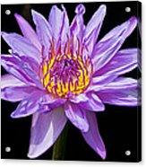 Waterlily Acrylic Print