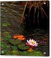 Waterlily In The Rain 2 Acrylic Print