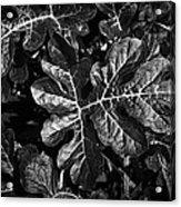 Watermelon Leaves Acrylic Print