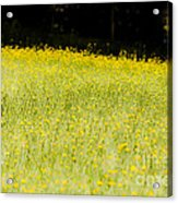 Waves Of Yellow Acrylic Print