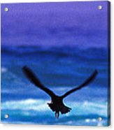 Wavewings Acrylic Print