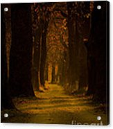 Way In The Forest Acrylic Print