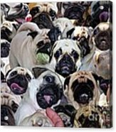 We Love Uno Acrylic Print