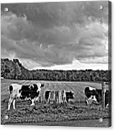 Weather Talk Monochrome Acrylic Print