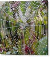 Web Design Acrylic Print