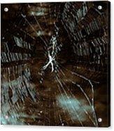Web Glitter Acrylic Print