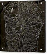 Web Master Acrylic Print