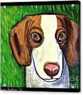 Wee Beagle Acrylic Print