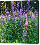 Weed Party Acrylic Print